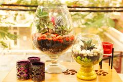 "Combo 10 - French Champagne (12"") & Italian Winery (6"") Terrariums"