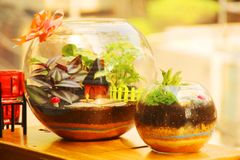 "Combo 5 - English Countryside (10"") & Ceasers Paradise (6"") Terrariums"