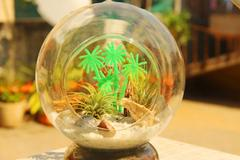 "Air Plant Hanging Terrarium Design 1 (6"")"