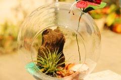"Air Plant Hanging Terrarium Design 2 (6"")"