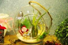 """Christmas Hanging Terrarium with Air Plant 1 (6"""")"""