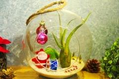 """Christmas Hanging Terrarium with Air Plant 2 (6"""")"""