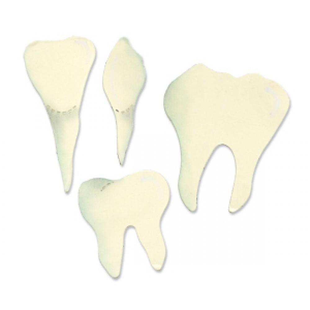 Sizzix Bigz Die - Teeth (Molar, Incisor & Canine) - A10823