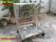 Steel Cage for Grey Parrot, Sun conure, Lory & Cockatiel