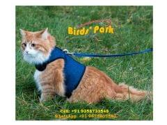 Cat Halter - Good for All cat …BY AIR