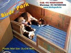 Plastic Mat For Cage Flooring Size: 1X3 Feet 'Good For Dog Goat Rabbit & Guinea Pigs' (18 Pcs set)