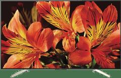 """SONY 75""""(190cm) UHD LED LCD Smart TV"""