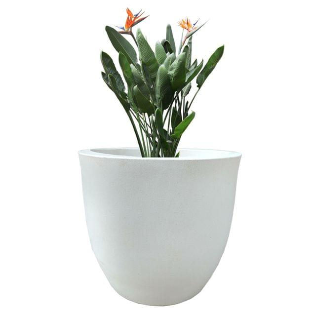 YUCCABE FOXB Pcup White 14 Inches Planter