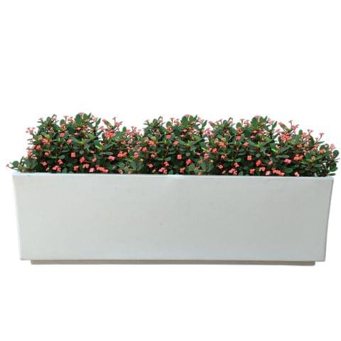 Yuccabe Italia FOX-B Box Tray Railing Hanging Rectangular White 24 Inches Planter