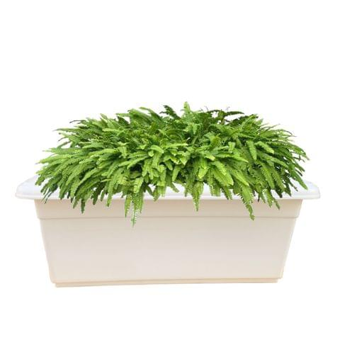 TP Tray 24 Inches Plastic Planter