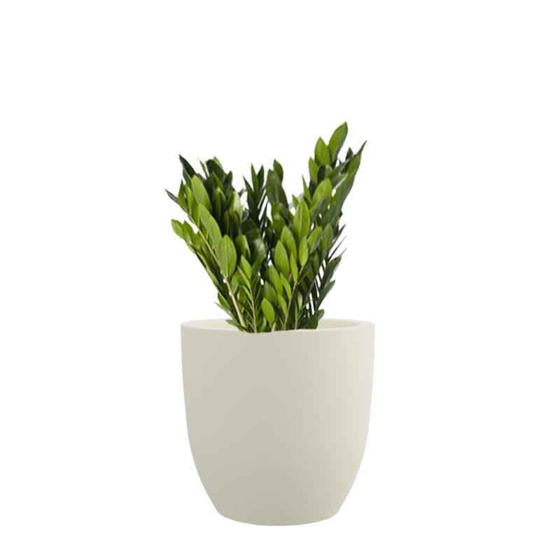 Creame White 8 Inches P Cup Planter