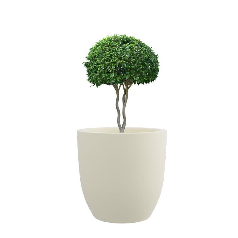 Creame White 10 Inches P Cup Planter