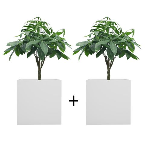 Pack of 2 Cream White BAR Square Planter