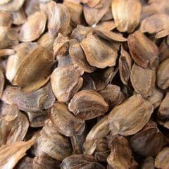 Superior Plant Seeds Tree Seeds High-Quality Fir Tree Seeds - 9