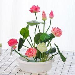 20PCS Superior Flower Seed High Germination Rate Survival - 1