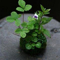 Creative Moss Ball Flower Pot Planter Bonsai Plant Holder Home Garden 6cm
