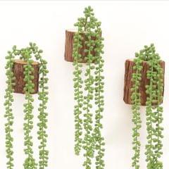 Artificial Flower String of Pearls Wall Hanging Succulents Plants Green