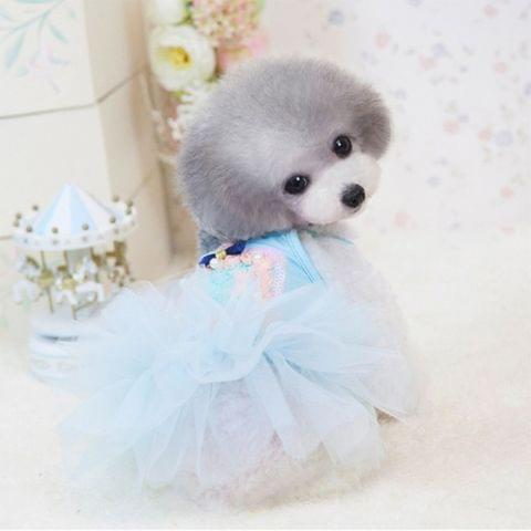 Spring & Summer Abby Perfume Queen Dress, Pink Princess Lace Skirt for Pets, Size: XL,37*37*54 cm(Blue)