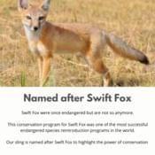 Swift Fox Sling